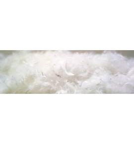 colchonesycamas.net-Plumas a granel para relleno al 15%-PlumasGranel15-20